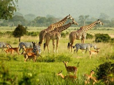 uganda commemorates wildlife day