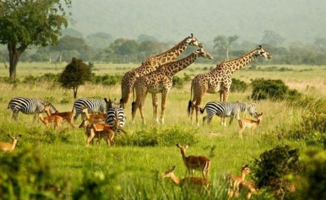 uganda commemorates wildlife day