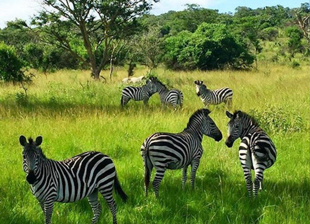 Uganda travel guide and destinatiosn