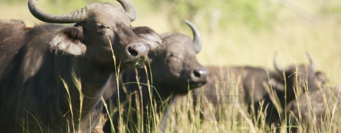 9 days uganda exclusive wildlife safari