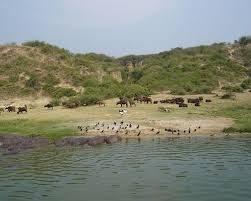 3 days Queen elizabeth national park animals